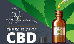 cbd oil for dogs with cancer near me